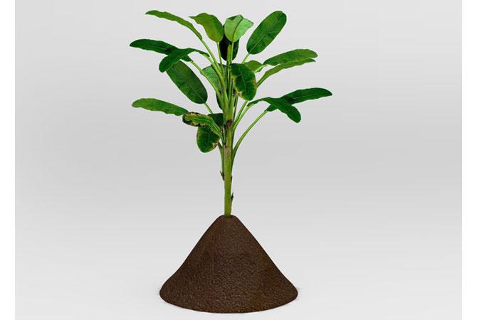 flowerpot_plant01